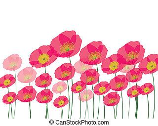 fila, de, papoula, flores, isolado, ligado, wh