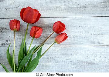 fila, de, tulipanes