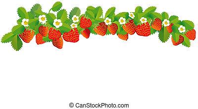 fila, fragole, illustrazione, -