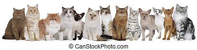 fila, gatos, aislado, trece