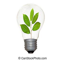 filament, arbre, pousse, ampoule incandescente, lumière