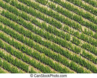 filas, vid, diagonal, viña, colina, pattern:, escarpado