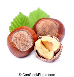 Filbert nuts with leaf on white background