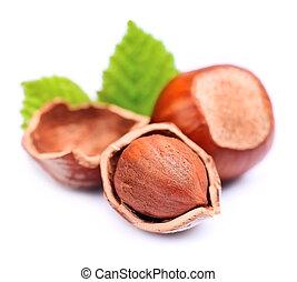 filbertnöt, nötter