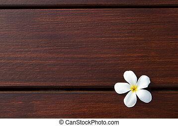 file of frangipani flower on wood t