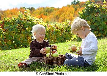 filhos jovens, jogar, em, pomar maçã