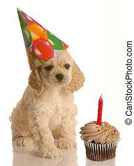 filhote cachorro, aniversário
