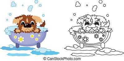 filhote cachorro, banho