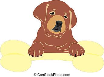 filhote cachorro, com, um, osso