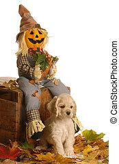 filhote cachorro, em, outono, cena