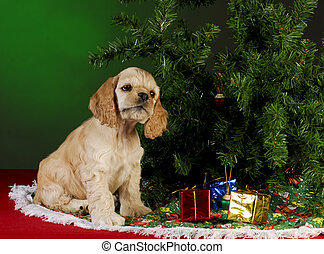 filhote cachorro, natal