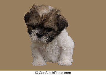 filhote cachorro, pondering