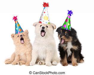filhotes cachorro, aniversário, cantando, feliz, canção