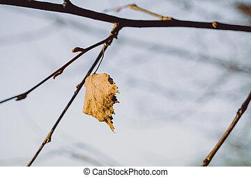 filiálka, svobodný, oak list