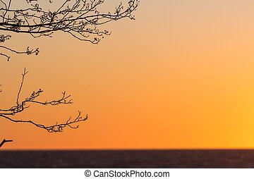 filiais árvore, pôr do sol
