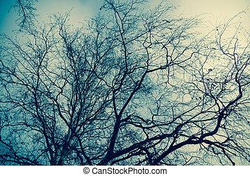 filiais árvore, sem, folhas, retro