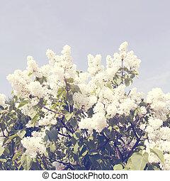 filial, med, fjäder, lila, flowers., årgång, retro designa
