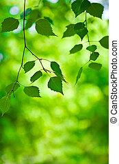 filial, uppe, grön fond, nära, suddiga