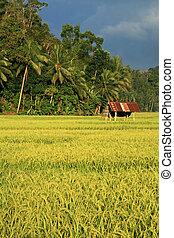 filipinas, bohol, isla
