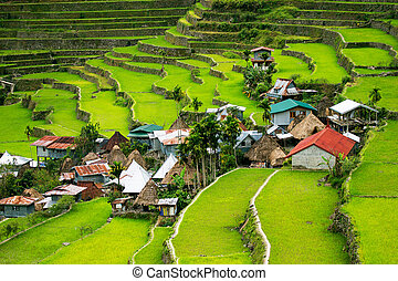 filipinas., filipinas, norte, terraces., banaue., batad, terrazas, arroz, cultivo, aldea, valle
