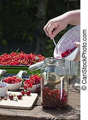Fill pitted cherries in a canning jar - Human hand is ...