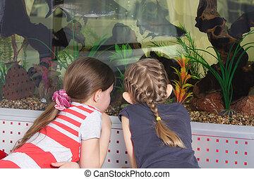 filles, aquarium