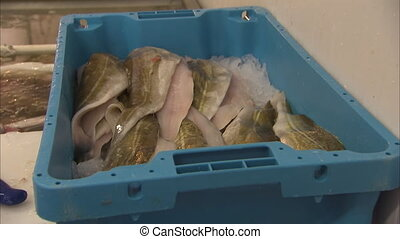 Filleted fish meat on ice - A medium shot of filleted fish...