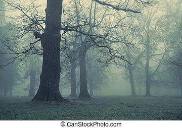 film, óriási, fa erdő