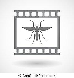 film 35mm, moustique, isolé, cadre, diapo, photogram