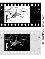 film macchina fotografica