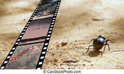 Film strip and a bug - Digital composite of a bug walking on...