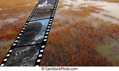 Film strip with different videos - Digital composite of film...