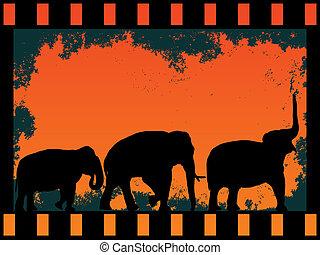 film strip with elephants