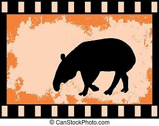 film strip with tapi
