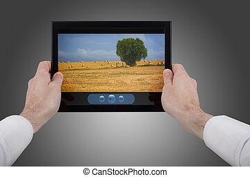 film, visande, hand, touchpad, pc, holdingen, manlig