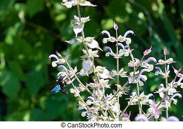 filmado, néctar, vespa, flight., pretas, collects,...