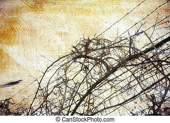 filo spinato, grunge, sopra, fondo, grape-vine