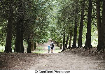fils, automne, marche, famille, nature, père, parc, promenade, forest., ensoleillé, dehors, day., ou