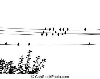 fils, oiseaux
