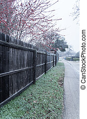 Filtered image bright Crimson red winterberry over wooden fence in snow fall near Dallas, Texas, USA