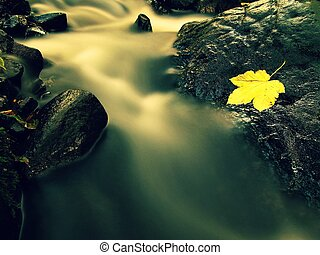 Filtered photo. Fall colors. Detail of gravel at mountain river covered with colorful autumnal leaves. Vivid colorful leaves and stones on river bank. Natural mirror in water used polarizing filter