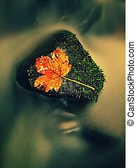 filtrado, photo., outono, colors., detalhe, de, cascalho, em, montanha, rio, coberto, com, coloridos, outonal, leaves., vívido, coloridos, folhas, e, pedras, ligado, rio, bank., natural, espelho, em, água, usado, polarizing, filtro