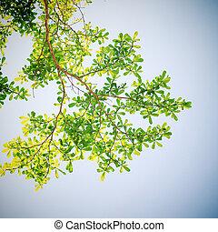 filtro, foglia albero, effetto