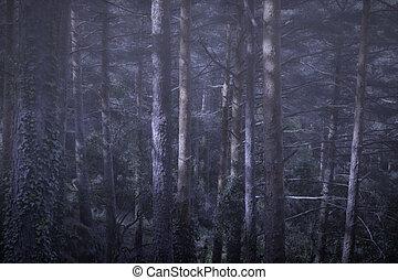 fim dia, em, um, floresta nebulosa