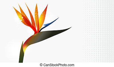 fim, flor, pássaro, cima, paraisos