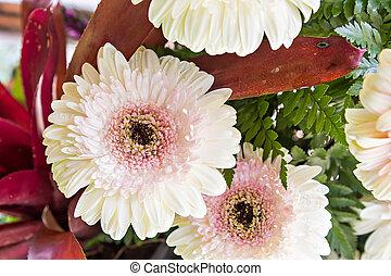 fim, flores, cima, white-pink