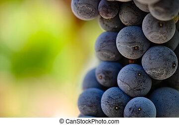 fim, uvas vermelhas, cima