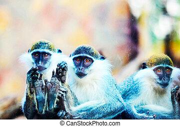 fin, 3, haut, singes