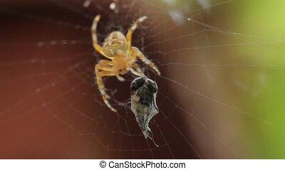 fin, araignés, haut