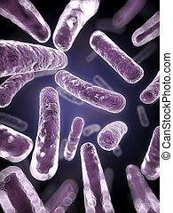 fin, bactérie, haut